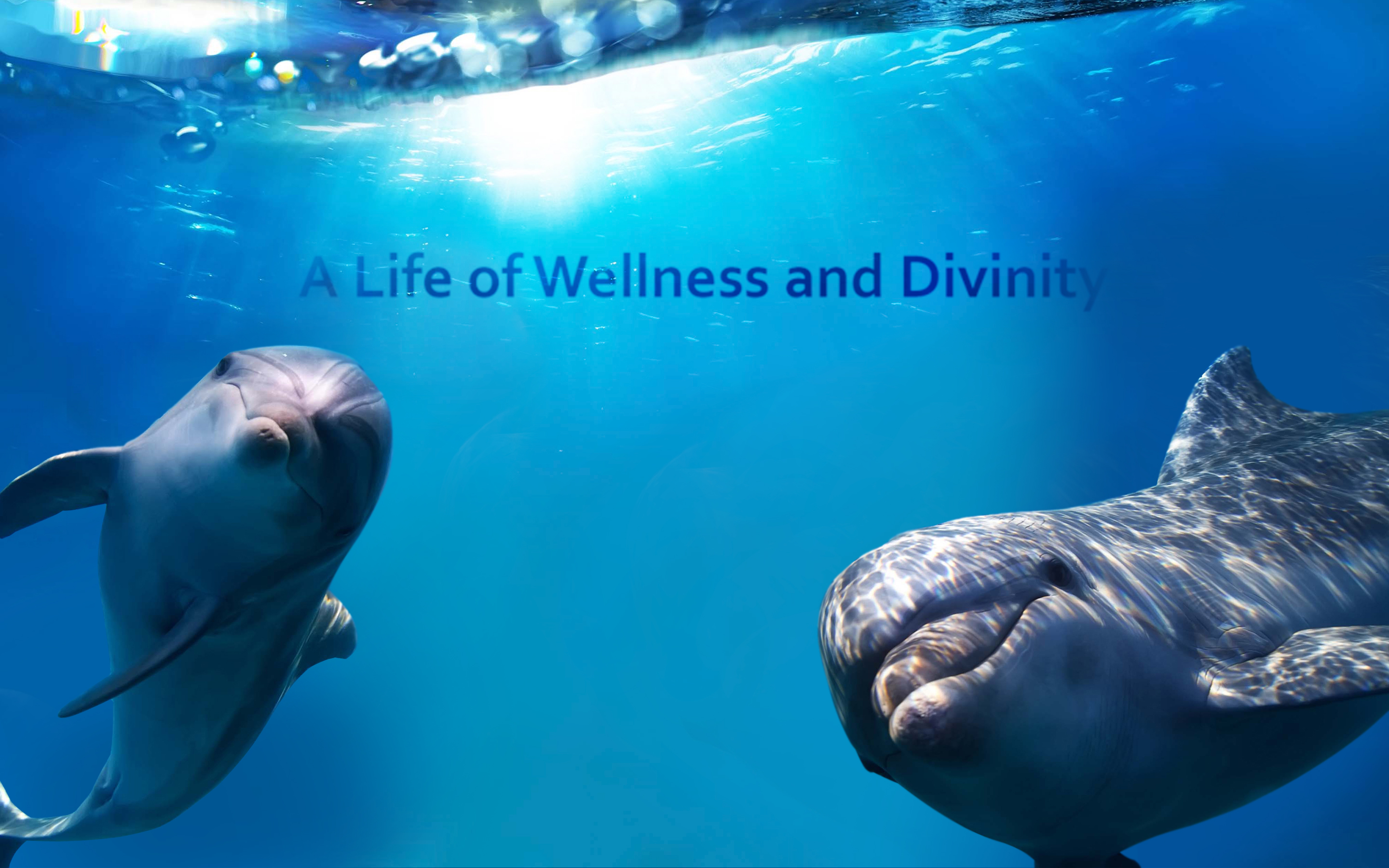 living a life of wellness Wellness planning and used consistently can increase your comfort and boost your ability to build a rewarding life about the live your life well campaign.